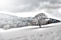 Tree in snowy landscape Royalty Free Stock Photo