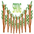 Tree and spring logo.