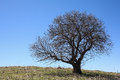 Tree in spring one against the blue sky Royalty Free Stock Photography