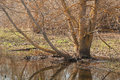 The tree standing in water without leaves spring Stock Photography