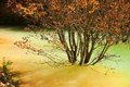 Tree stands in water opaque vivid yellow and green Stock Photography