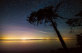 Tree with stars on coast with distant lights and at night Stock Photography