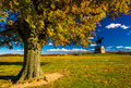 Tree and statue on a battlefield at Gettysburg, Pennsylvania. Royalty Free Stock Photo