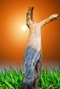Tree stem dry on a green grass field against the sun Stock Photo