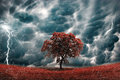 Tree on stormy landscape eco concept with lightening and storm like ecological Stock Photos