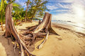 Tree stump on beach tropical Stock Photo