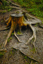 Tree stump due to deforestation process Stock Images