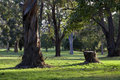 Tree stump of in park Royalty Free Stock Image