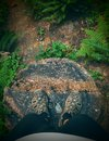 Tree stump and pov hiker on after oregon hike Stock Images