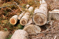 Tree stump remains from deforestation in scotland uk europe Stock Photography