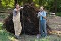 Tree Stump Removal Royalty Free Stock Photo