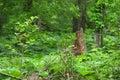 Tree stump surrounded be vegetation Royalty Free Stock Photo