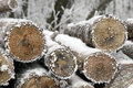 Tree stump in winter time stacked wood logs the forest Stock Photos