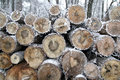 Tree stump in winter time stacked wood logs the forest Stock Photo