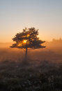 Tree in sunrise a behind a Royalty Free Stock Photography