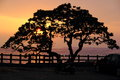 A tree at sunset Royalty Free Stock Photo
