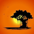 Tree on Sunset View Royalty Free Stock Photos