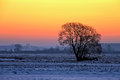 Tree at sunset in winter Royalty Free Stock Photo