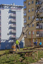 Tree surgeon of urban tree, cuts and trims a tree Royalty Free Stock Photo
