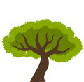 Tree symbolic icon vector illustration Royalty Free Stock Image