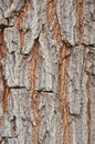 Tree texture background as vertical view Royalty Free Stock Photo