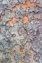 Tree textured background