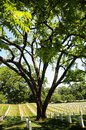 Tree and tombstone rows at Arlington Cemetery Royalty Free Stock Photography