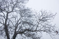Tree top branches winter mood Royalty Free Stock Photography