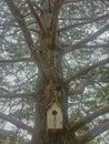 Tree top peace outdoors fall Stock Image