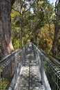 Tree Top Walk Royalty Free Stock Photo
