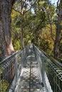 Tree Top Walk Royalty Free Stock Photo