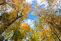 Tree tops in autumn foliage Royalty Free Stock Photo