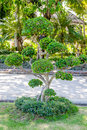 Tree trimmed Royalty Free Stock Photo