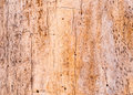 Tree trunk background for wallpaper or art Royalty Free Stock Photo