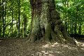 Tree trunk in the forest Royalty Free Stock Image