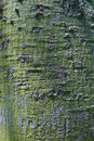 Tree trunk green lines of an old Royalty Free Stock Photos
