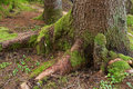 Tree trunk with green moss Stock Photography