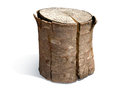 Tree Trunk Royalty Free Stock Photo