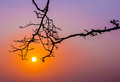 Tree trunk reach out to sunrise silhouette morning in twilight sky Royalty Free Stock Images