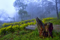 Tree trunk root in park in misty morning Royalty Free Stock Photo