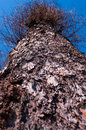 Tree trunk the with rough bark Stock Images