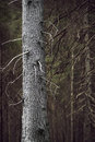 Tree trunk in spooky forest bare with dry branches Royalty Free Stock Photography