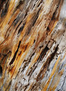 Tree trunk texture Royalty Free Stock Photos