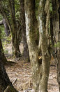 Tree trunk trunks of new trees in the forest Stock Photography
