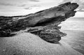 Tree trunk wallpaper massive calmly on the beach Royalty Free Stock Photography