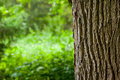 Tree trunk in the woods closeup and blurred meadow background Royalty Free Stock Photos