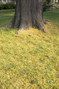 Tree trunk with yellow grass Royalty Free Stock Photo