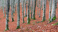 Tree trunks in autum autumn forest Royalty Free Stock Photography