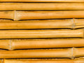 Tree trunks a bamboo Stock Image