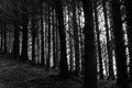 Tree trunks in a dark forest Stock Images